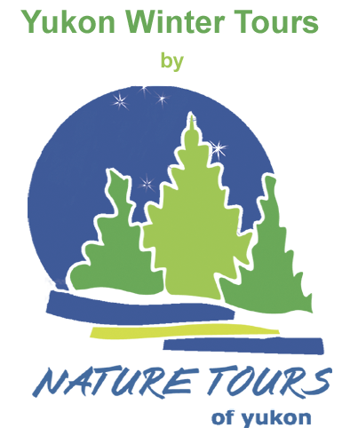 Nature Tours of Yukon's Northern Lights and winter tours